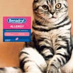 Bendaryl for Cats: How Much Should You Give and How?