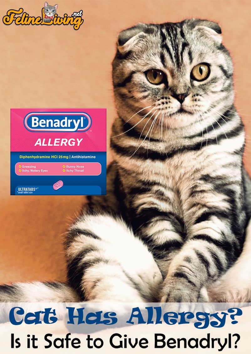 Benadryl For Cats 7 Best Uses For It Revealed