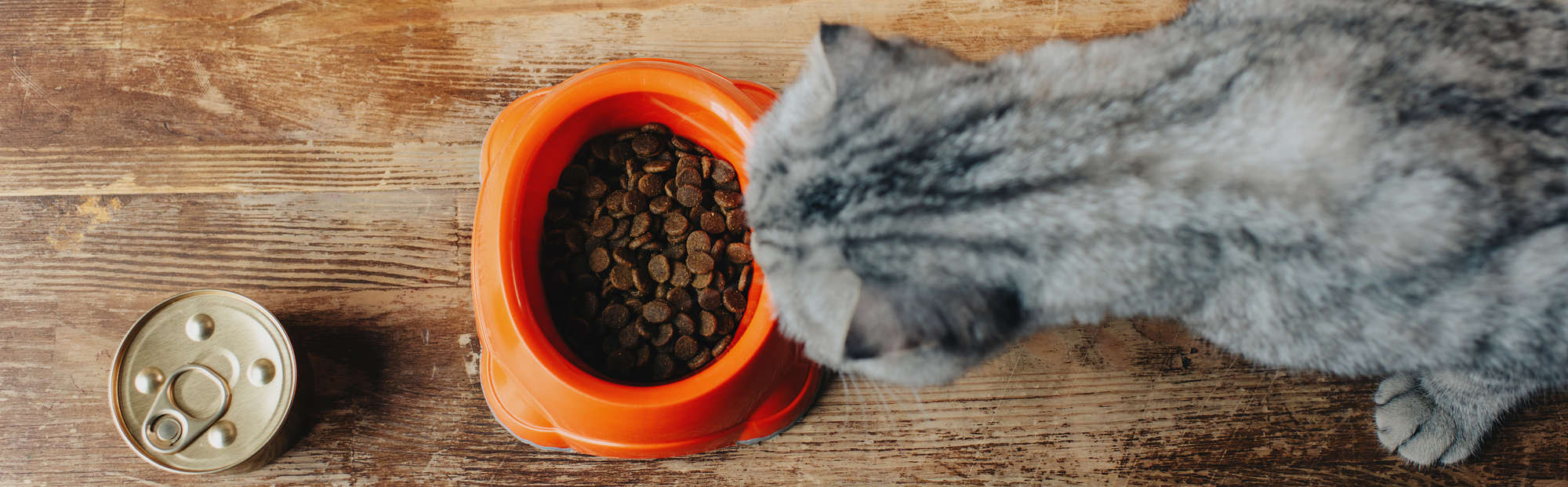 low phosphorus cat food