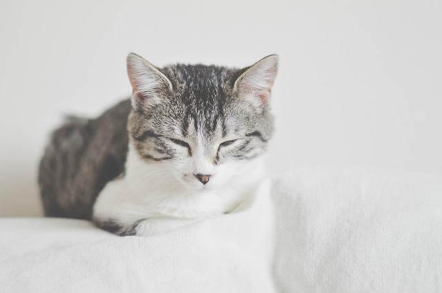 image of an ill feline