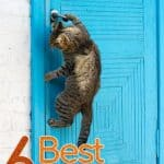 Top 6 Best Cat Doors Reviews 2021: Comprehensive Buyer's Guide