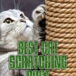 Best Cat Scratching Post: Comprehensive Reviews and Buyer Guide for 2021