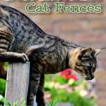 The 6 Best Invisible Fence For Cats [2021 Reviews & Buyer's Guide]