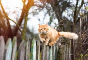 Invisible fence for cats