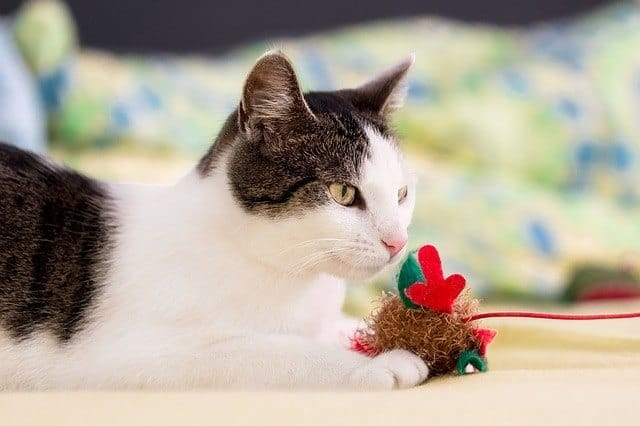 image of a feline with her toy-mouse