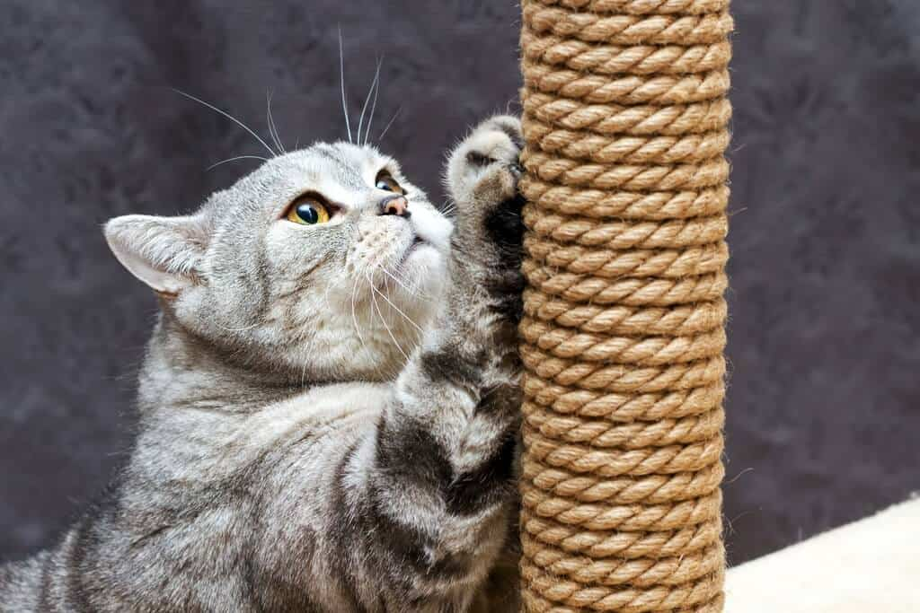 image of a cat scratching a scratching post