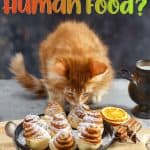 Can Cats Eat Human Food? Fruits, Vegetables, Dairy, Fish, Grains...