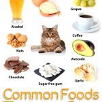 Which Foods Are Toxic for Cats: Know It All Here