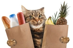 Cat carries bags with human food