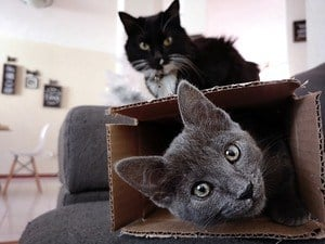 image of cats and box