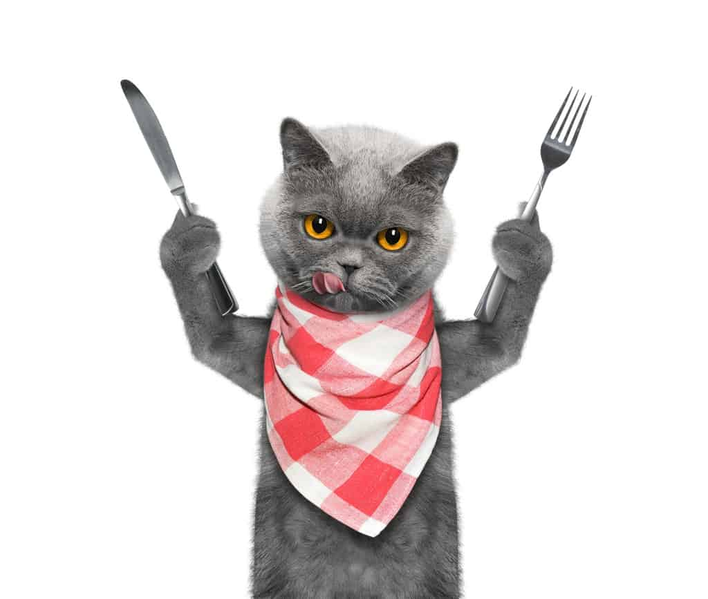 cat wants to eat and hold knife and fork isolated on white