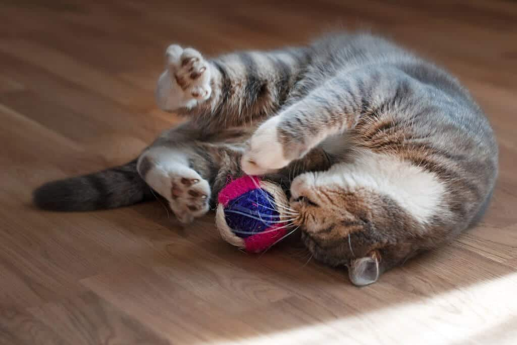 image of a kitty playing with DIY Cat Toys