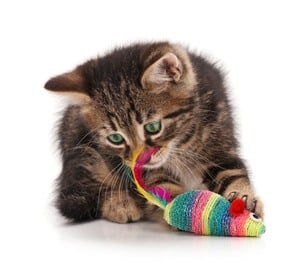 image of a kitty playing with a mouse toy