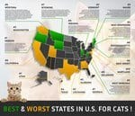 Best and Worst States for Cats and Their Owners