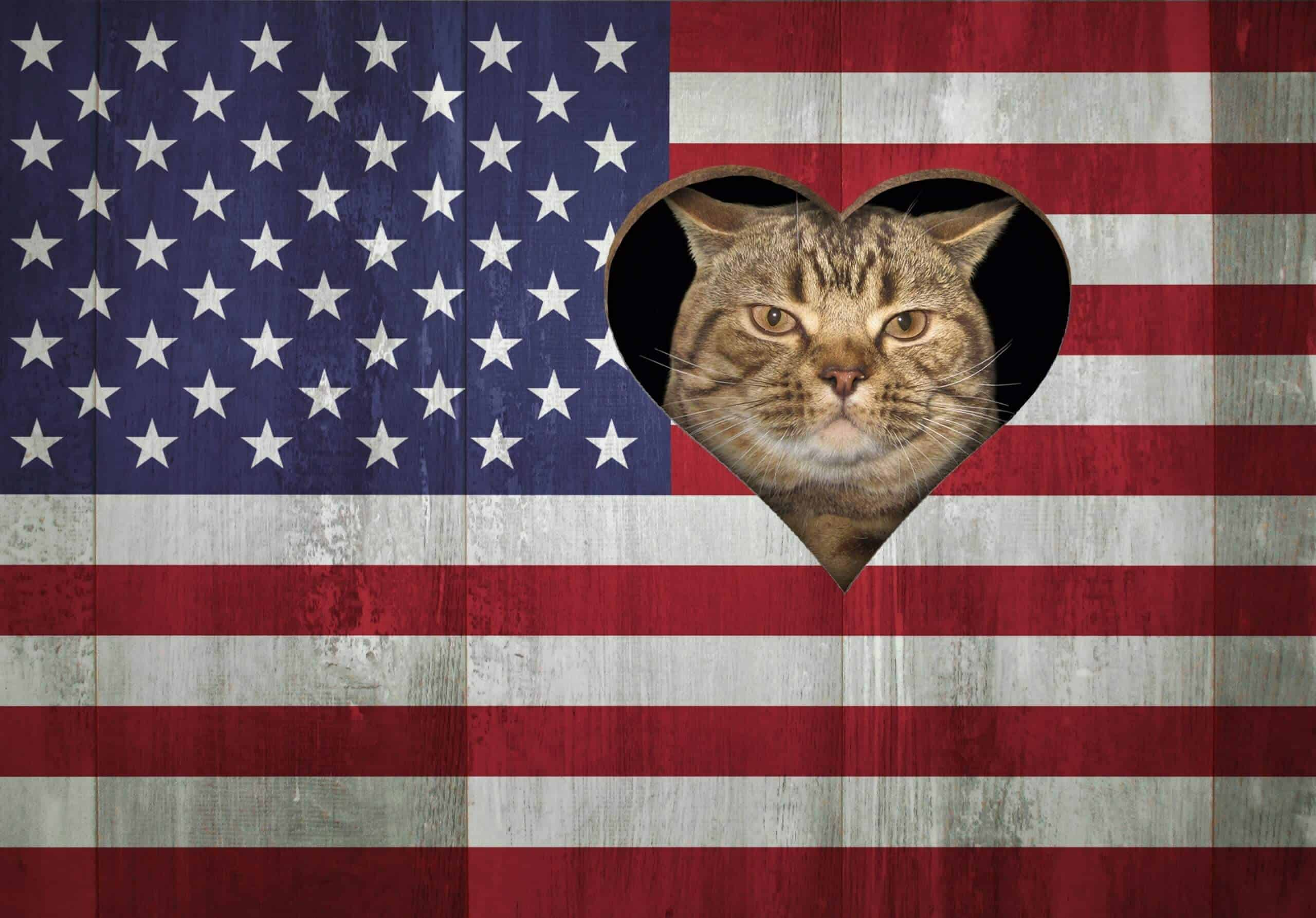 The cat looks through a hole in the US flag