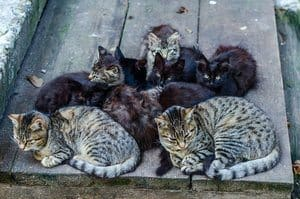 Stray cats family. Group of sitting cats and kitten.