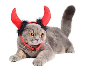 Portrait of British gray cat wearing a devil costume on white background