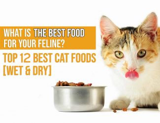 Best Cat Food: 2021 Buyer's Guide for Wet & Dry