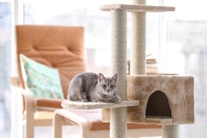 image of a cat sitting on a cat tree