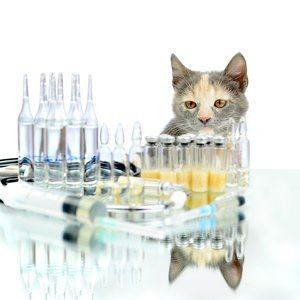 Cat in a veterinary clinic looks at an ampoule with a vaccine. Аnimal treatment