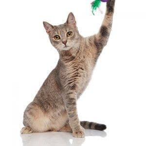 adorable cat playing with flower toy and looking to side while sitting on white background