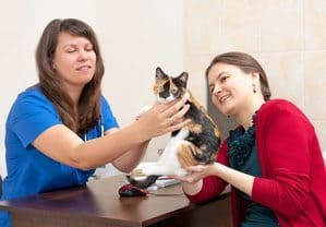 Woman vet consults cat owner