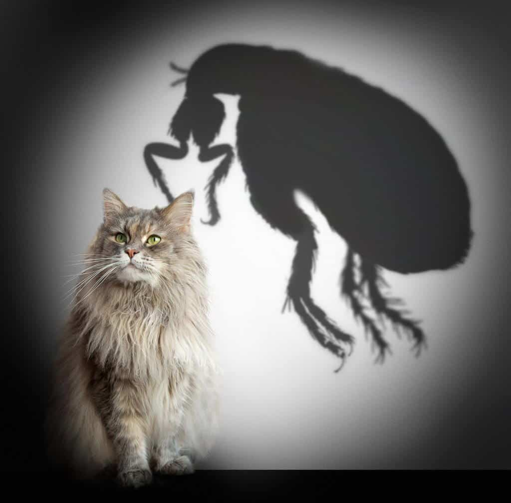 Cat and flea shadow. Concept graphic.