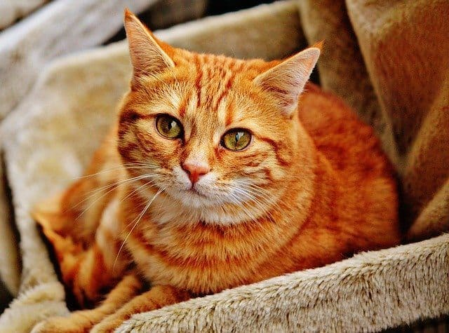 image of an orange kitty in home