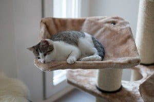 image of a feline sleeping on the cat tree