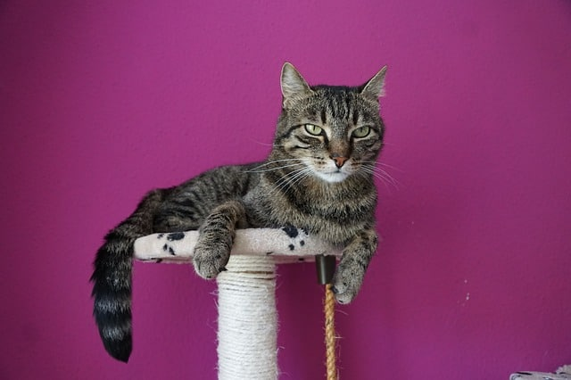 image of a cat laying on her tree