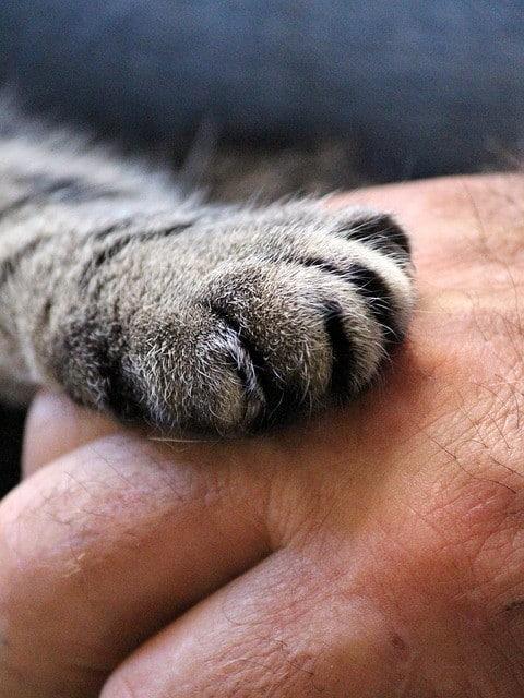 image of feline paw