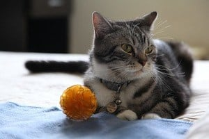 image of a kitty with a toy ball