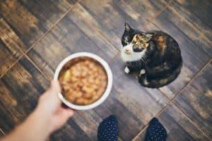 Pure Balance Cat Food
