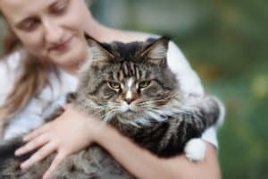maine coon with owner