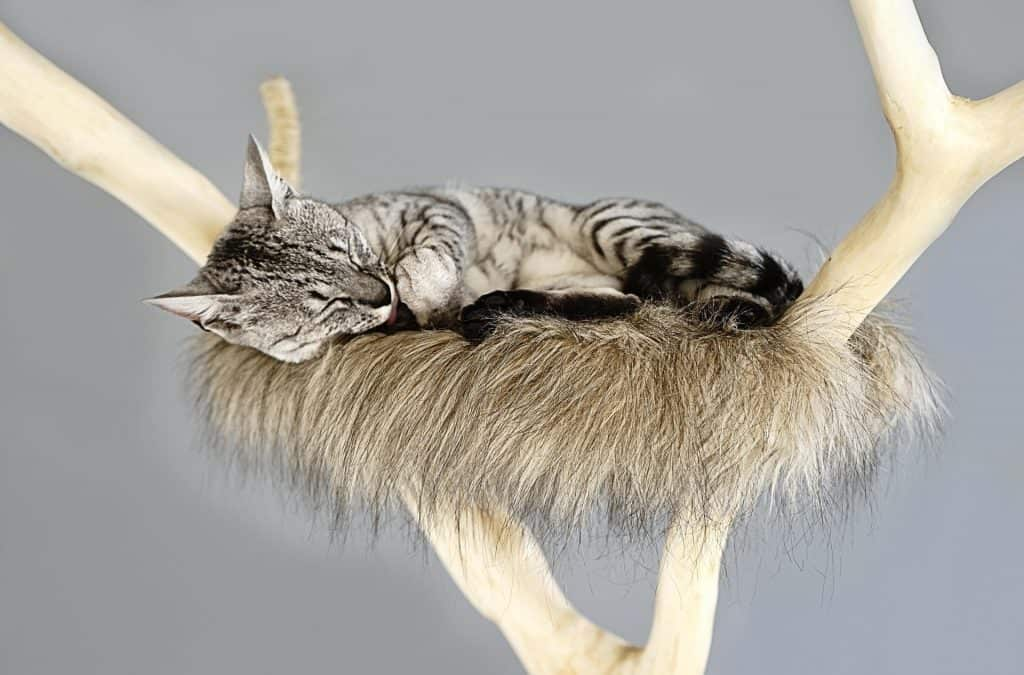 cat sleeping on tree