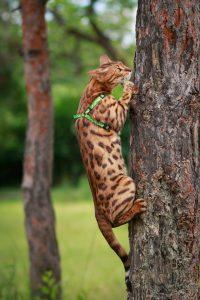 chat sur l'arbre