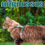 Best Cat Harnesses of 2021: A Comprehensive Guide
