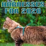 Best Cat Harnesses of 2020: A Comprehensive Guide