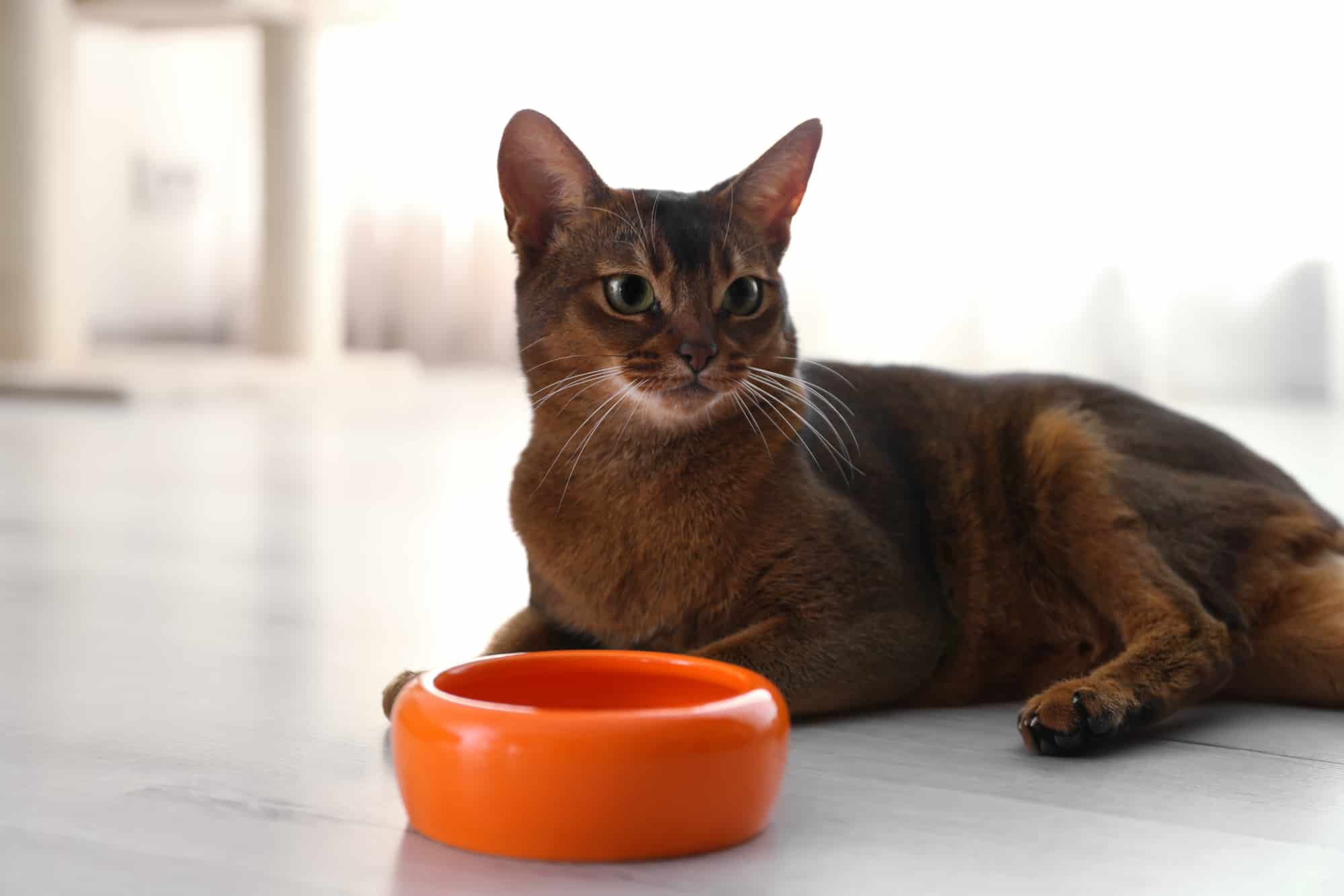 What You Need To Know About Probiotics For Cats 23