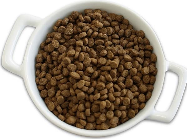 Best Cat Food: 2021 Buyer's Guide for Wet & Dry 33
