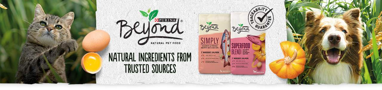purina beyond cat food review