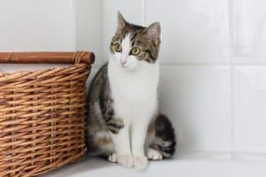 Cat sitting near the basket
