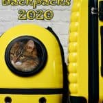 Best Cat Backpacks 2020: Examples, Buying Guide and How To Use