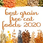 Best Grain Free Cat Food Reviews and Complete Buyer's Guide (2020)
