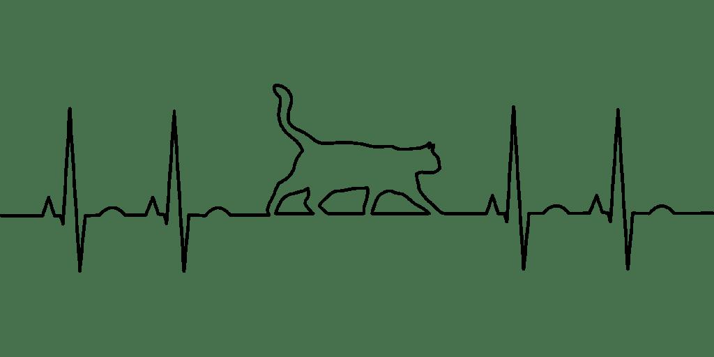 cat cardiogram