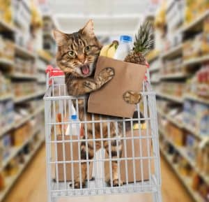 cat grocery