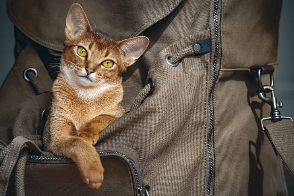 Best Cat Backpack