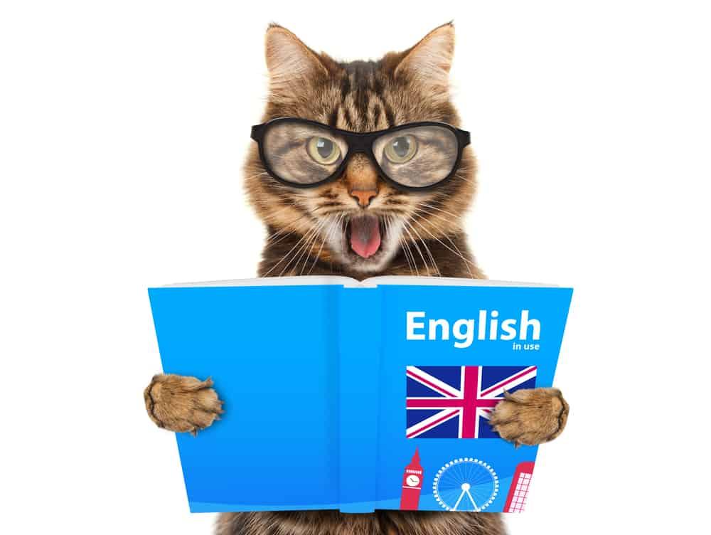 cat read