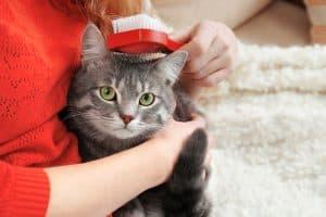 woman brushing cat