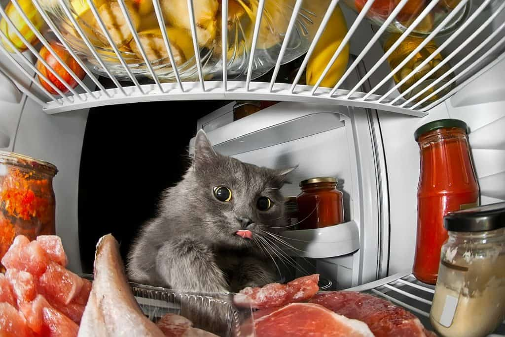 cat in the refrigerator